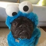 _CookieMonster_